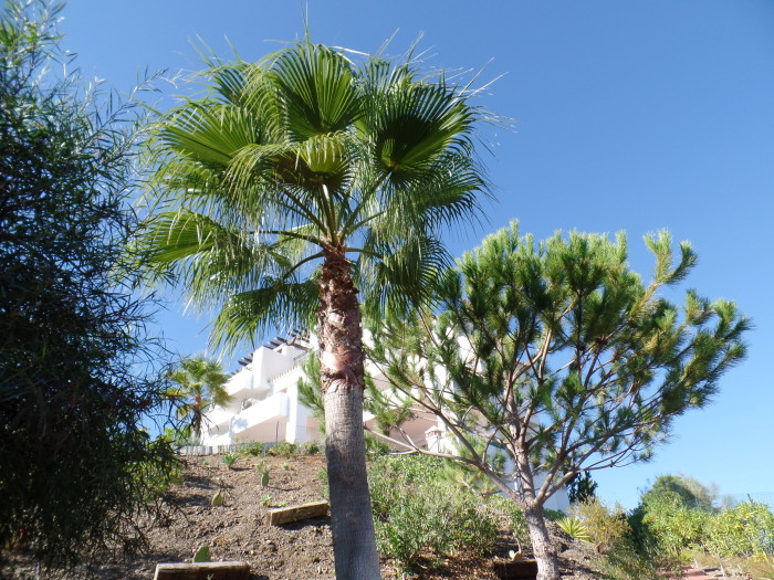 palmen en cypressen